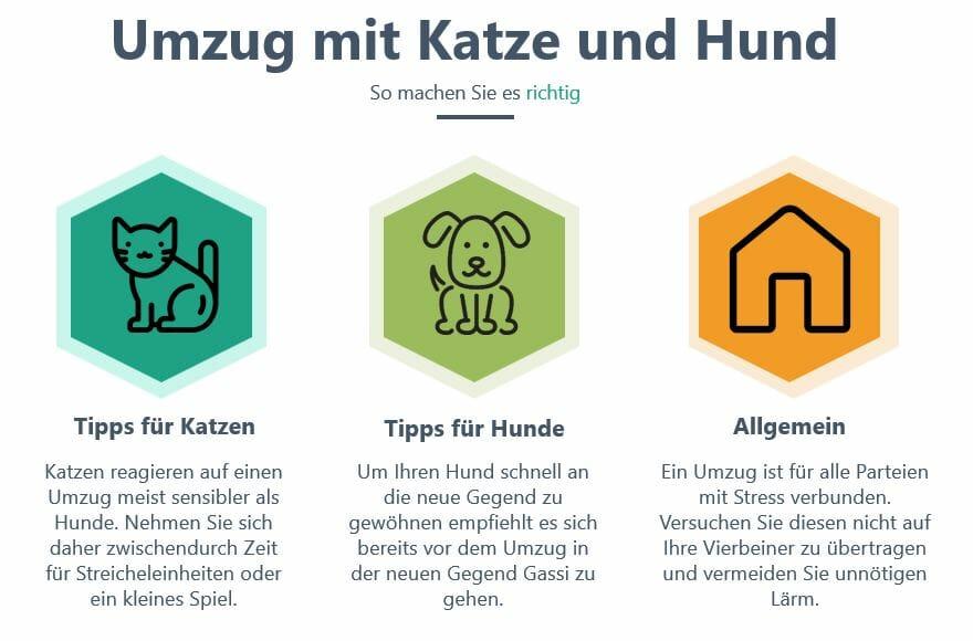 umzug mit katze und hund_infografik_die besten umzugstipps